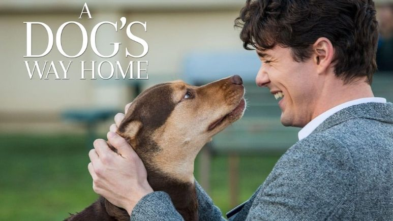 Watch  A Dog's Way Home (2019) on Netflix